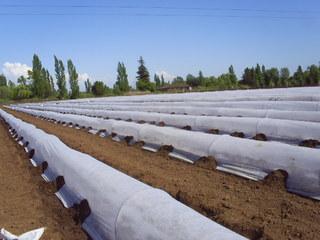 Zakrývací netkaná textilie 17g, role 1,6x250m bílá