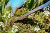 Jak zvolit správnou agrotextilii na ochranu rostlin před plevelem