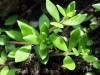 Udržte vodu v zahradě – tipy na protierozní opatření