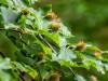 Usnadněte si sběr plodů na zahradě i v lese